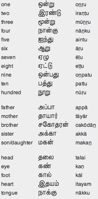 basic hindi words with tamil meaning pdf